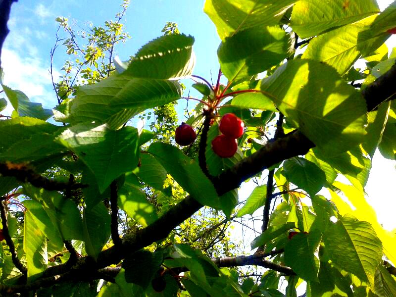Frutta Canto di Primavera del Sogno antico